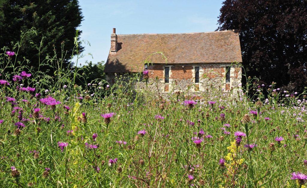 Franciscan Gardens wild flower meadow
