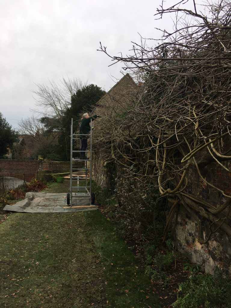 Gardeners Blog 29th January 2021